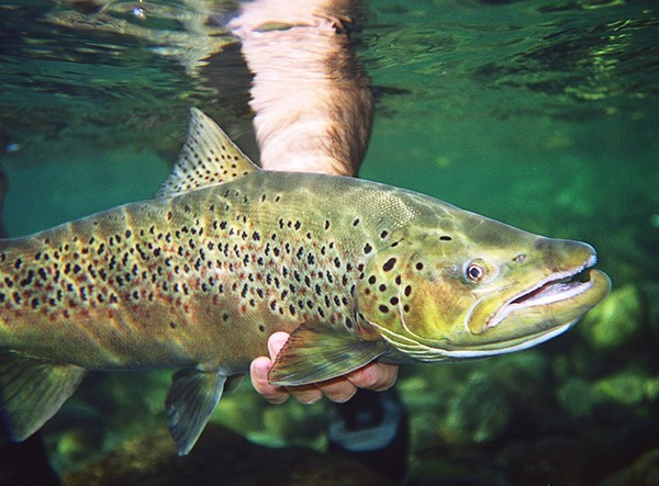 Perform Patagonia Argentina fishing trips