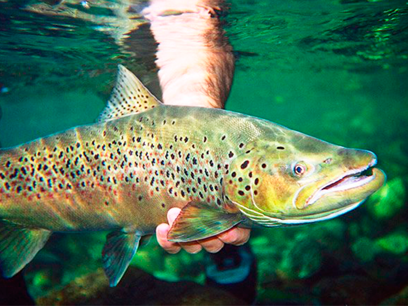 In Bariloche, the best fly fishing is by Outfitters Patagonia